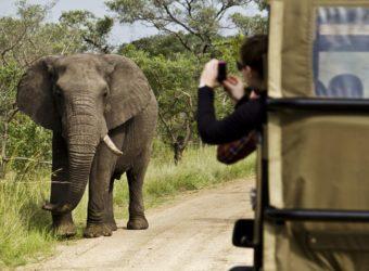 Comment bien planifier votre safari en famille en Afrique du Sud ?