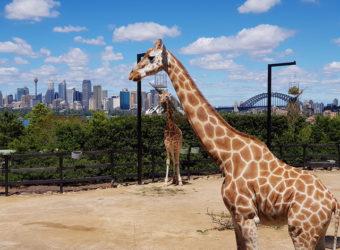 Vacances en famille en Australie : top 3 des activités à faire absolument